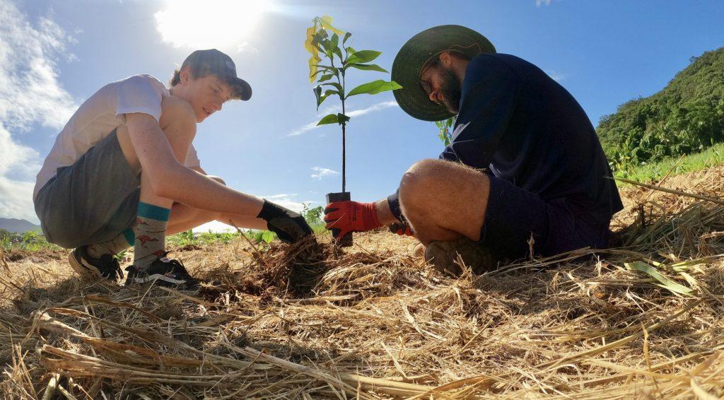 Arlian planting trees
